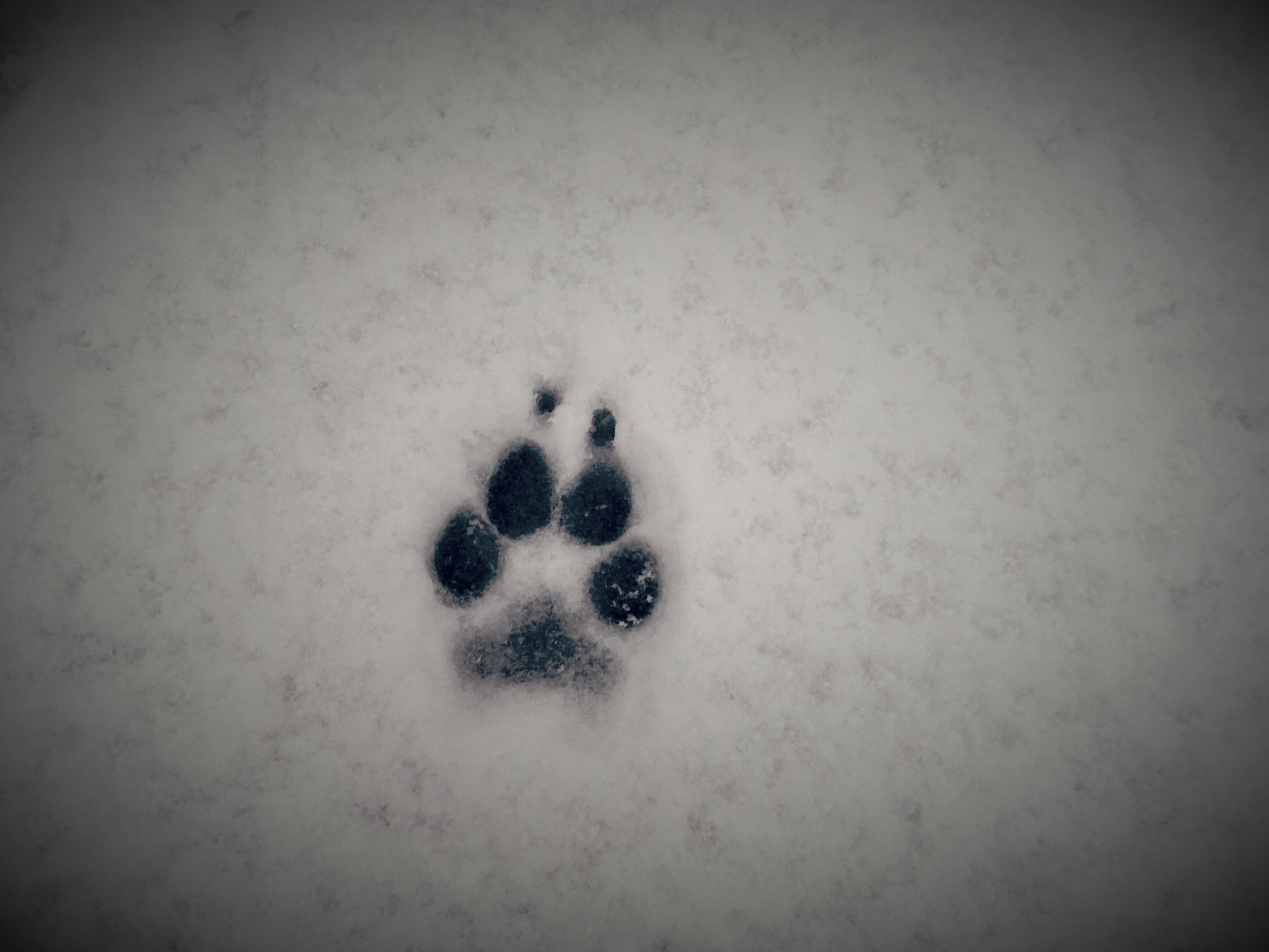 20171210 112253 - Er is een hoop nieuwe sneeuw gevallen de afgelopen zeven dagen...