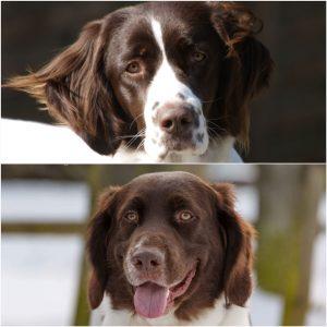 20170922 092606 300x300 - Uitvliegen Pups Nina & Cooper
