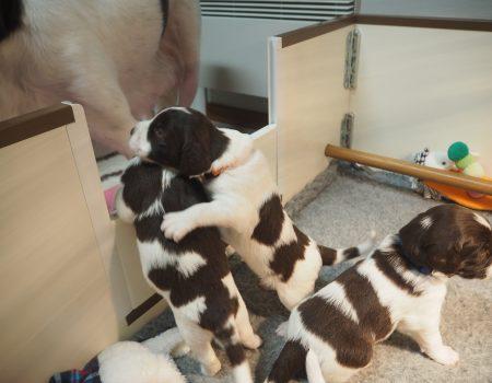 PC140015 450x350 - Dag 20 en 21 van onze pups