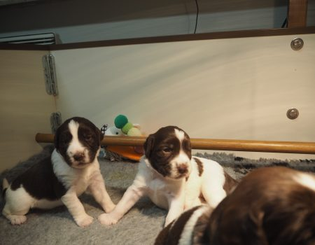 PC140023 450x350 - Dag 20 en 21 van onze pups