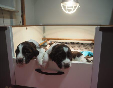 PC140031 450x350 - Dag 20 en 21 van onze pups