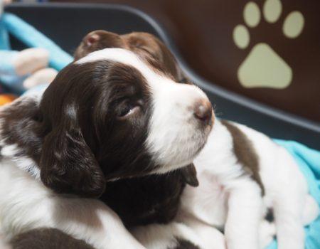 PC140122 450x350 - Dag 20 en 21 van onze pups