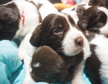 PC140124 450x350 - Dag 20 en 21 van onze pups