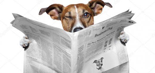 depositphotos 8636196 stockafbeelding hond krant lezen en knipogend 520x245 - Puppy nieuws!
