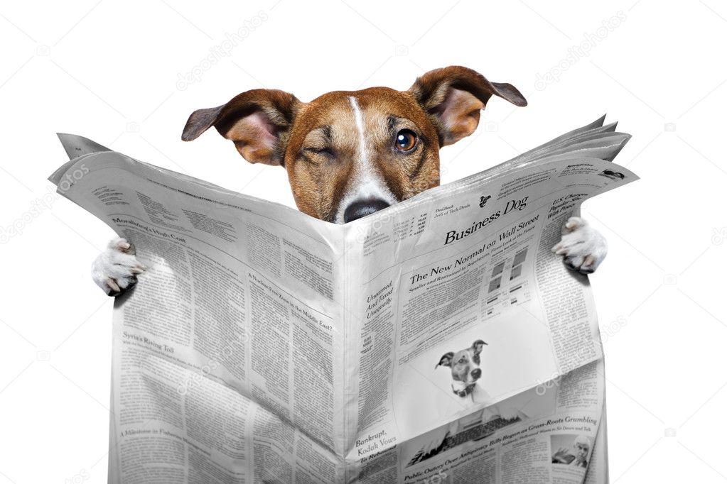 depositphotos 8636196 stockafbeelding hond krant lezen en knipogend - Puppy nieuws!
