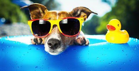 03 zonnige hond rgb zonder logo puur 480 x 320 1 480x245 - Wat te doen bij warm weer?