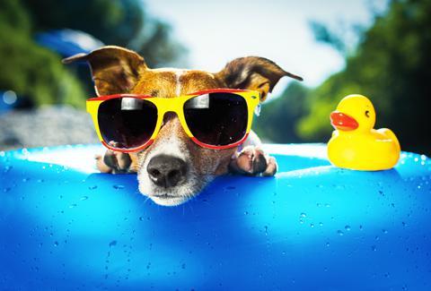 03 zonnige hond rgb zonder logo puur 480 x 320 1 - Wat te doen bij warm weer?