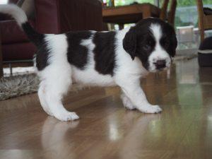 P7010113 300x225 - Puppy Info