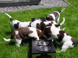P7050059 300x225 - Puppy Info