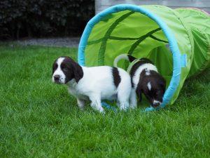P7050229 300x225 - Puppy Info