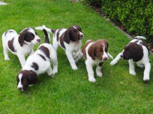 P7170158 300x225 - Puppy Info