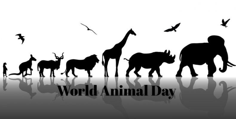 World Animal Day ss 559680808 790x400 - Fijne Werelddierendag!