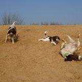 54728126 832555270422721 4988542434846703616 n 160x160 - Honden & vrije tijd = Honden & baasjes in beweging!