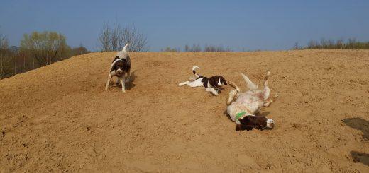54728126 832555270422721 4988542434846703616 n 520x245 - Honden & vrije tijd = Honden & baasjes in beweging!