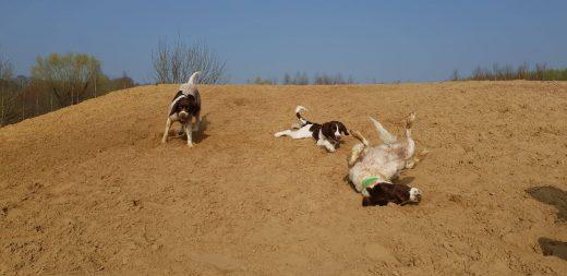 54728126 832555270422721 4988542434846703616 n 520x253 - Honden & vrije tijd = Honden & baasjes in beweging!