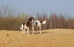 55752500 2448397691839061 3771222521316114432 n 300x191 - Honden & vrije tijd = Honden & baasjes in beweging!