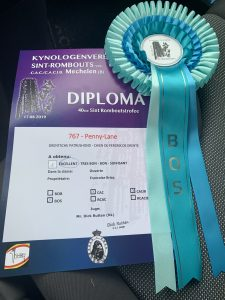 IMG 7916 e1568476970802 225x300 - Dogshow results summer 2019😎