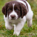 Boris 160x160 - Brief van een mama hond aan de nieuwe eigenaren van haar pup: