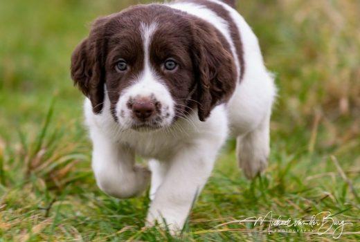 Boris 520x350 - Brief van een mama hond aan de nieuwe eigenaren van haar pup: