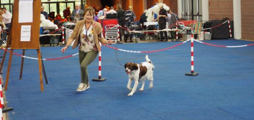 PA270033 520x245 - Internationale Hondenshow Lovaniumtrofee 2019