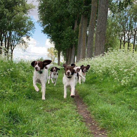 happy dogs 520x520 - Beweging en activiteiten met je Drent!