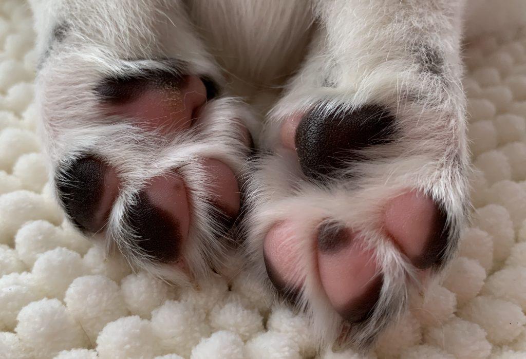 IMG 5674 1024x699 - Brief van een mama hond aan de nieuwe eigenaren van haar pup:
